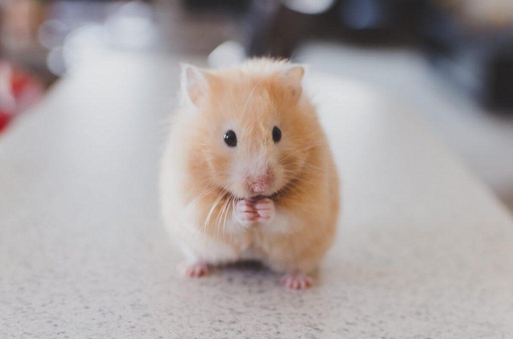 que significa soñar con raton