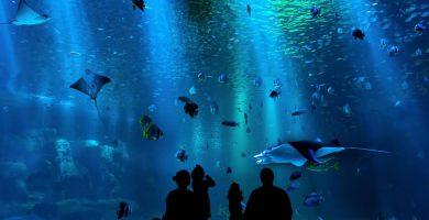 soñar con acuario significado