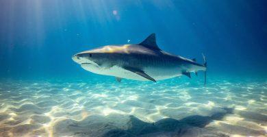 soñar con tiburón significado
